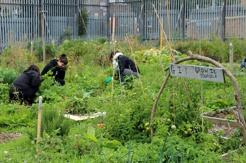 Some of our members digging deep in Bridgefoot St Community Garden